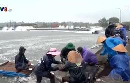 Người nuôi tôm ở Thừa Thiên Huế trúng đậm dịp Tết