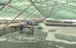 Xây dựng khu nông nghiệp công nghệ cao - Bước phát triển đột phá ngành tôm