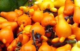 Cảnh báo chất cực độc trong hoa quả trang trí dịp Tết Nguyên đán
