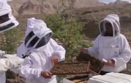 Mô hình nuôi ong bền vững ở UAE