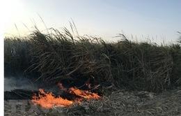 Hỏa hoạn tại cánh đồng mía rộng gần 20 ha ở Kon Tum