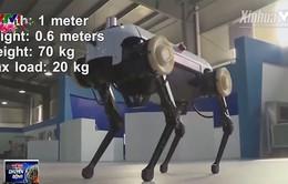 Thú vị robot 4 chân phi được như ngựa