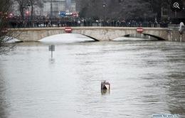 Cảnh báo nước biển dâng ngày càng nhanh