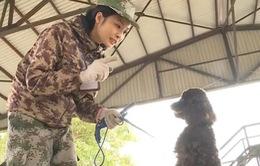 Chó cảnh cũng được huấn luyện như... chó nghiệp vụ