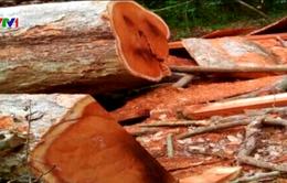Thêm vụ phá rừng quy mô lớn tại Vườn quốc gia Yok Đôn