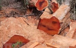 Kon Tum: Điều tra vụ phá rừng trái phép tại xã Đăk Sao