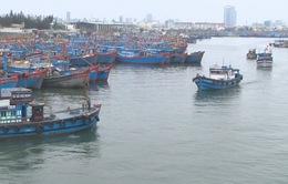 """Ngư dân miền Trung trúng """"lộc biển"""" đầu năm"""