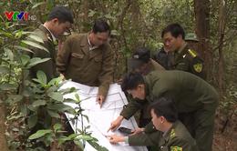 Cộng đồng nhiều địa phương tích cực quản lý, bảo vệ rừng
