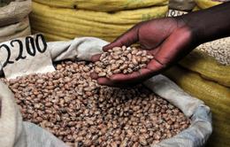 LHQ cảnh báo về nguy cơ mất an ninh lương thực tại châu Phi