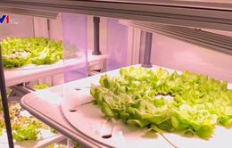 Nhà hàng tự trồng rau để phục vụ thực khách
