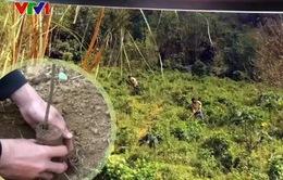 Nhiều địa phương hưởng ứng Tết trồng cây