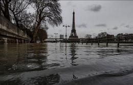 Các chuyến tàu trên sông Seine (Pháp) hoạt động lại sau lũ lụt