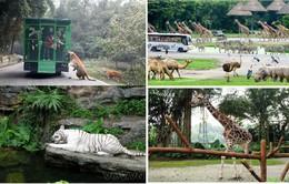 Đến đảo ngọc Phú Quốc xem thú hoang dã quý hiếm