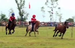 Sôi động lễ hội đua ngựa gò Thì Thùng, Phú Yên