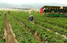 Trung Quốc đẩy mạnh mua đất nông nghiệp ở nước ngoài