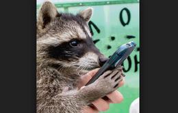 Kenya phát triển ứng dụng tương tác với các loài vật