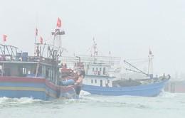 Ngư dân Thừa Thiên Huế sôi nổi xuất quân đánh bắt vụ cá nam