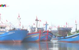 Ngư dân TT-Huế ra quân đánh bắt vụ cá Nam năm 2018