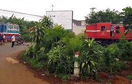 Làm rõ nguyên nhân hai tàu hỏa suýt tông nhau tại Đồng Nai
