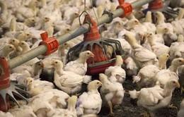 Thêm tín hiệu về hồi kết trong tranh chấp buôn bán nông sản Mỹ - Trung Quốc