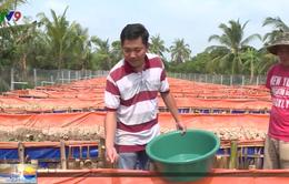 Bỏ chức giám đốc ở công ty nước ngoài, thanh niên Vĩnh Long về vườn nuôi lươn