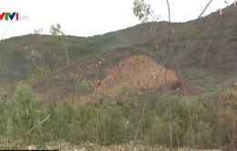 Bình Thuận có nguy cơ cháy rừng cao