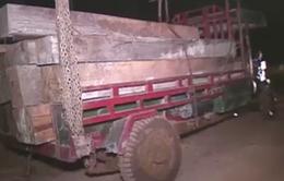 Đắk Lắk: Bắt giữ vụ vận chuyển gỗ trái phép quy mô lớn