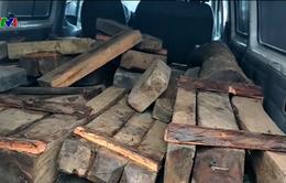 """""""Nóng"""" tình trạng vận chuyển gỗ trái phép dịp giáp Tết"""