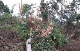 Phú Yên: Kỷ luật một số cán bộ chủ chốt của huyện Đồng Xuân và huyện Tây Hòa