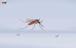 Củng cố hệ thống giám sát côn trùng, chủ động phòng chống sốt xuất huyết