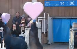 Sinh vật biển biểu diễn mừng ngày Valentine sớm ở thủy cung Tokyo