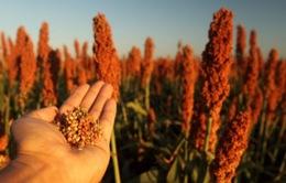 Trung Quốc điều tra chống bán phá giá đối với nông sản Mỹ