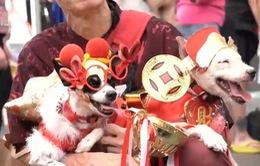 Lễ hội chó cưng chào mừng tết Mậu Tuất tại Singapore
