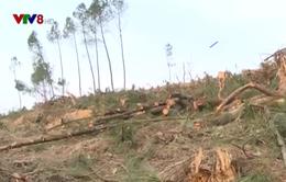 Phức tạp tình trạng phá rừng giao khoán tại Hà Tĩnh