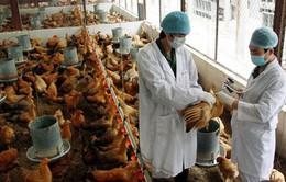 Chủ động phòng chống dịch cúm A/H7N9.