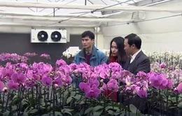 Đầu tư công nghệ hiện đại trồng hoa