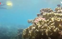 "Rạn san hô Great barrier (Australia) đang ""kêu cứu"""