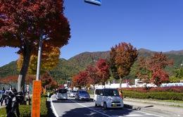 Xem lại series Sắc màu Nhật Bản 2018 trên VTV News