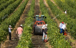 Xu hướng cử nhân đại học về quê làm nông dân ở châu Âu