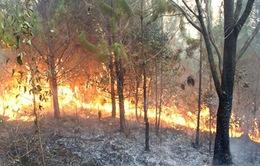 Cảnh báo nguy cơ cháy rừng ở Trung Bộ