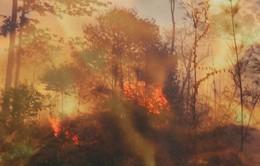 Gia Lai: Gần 400.000 ha rừng có nguy cơ cháy cao