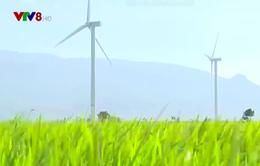 Xây dựng Ninh Thuận thành trung tâm năng lượng tái tạo cả nước