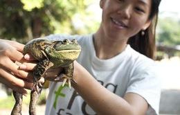 Ghé thăm trang trại ếch tại Singapore