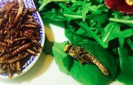 Trải nghiệm bữa tối côn trùng