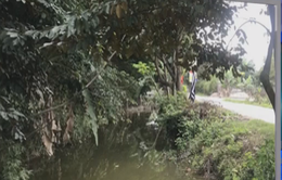 Hải Phòng: Hai trẻ em tử vong do rơi xuống mương nước