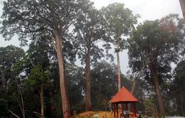 Đổng bào Cơ Tu ở Quảng Nam giữ rừng để phát triển du lịch