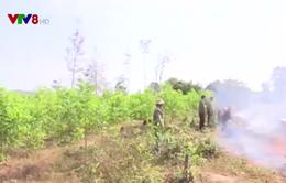 Đắk Lắk tăng cường phòng chống cháy rừng