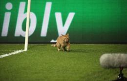Cầu thủ xuất sắc nhất trận Besiktas - Bayern Munich là một chú... mèo?