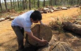 Vụ phá rừng cộng đồng ở Tuy Đức, Đắk Nông: Khởi tố, tạm giam Chủ tịch UBND xã Đắk R'Tih