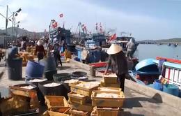 Bình Định chủ trương xóa tàu cá công suất dưới 20CV